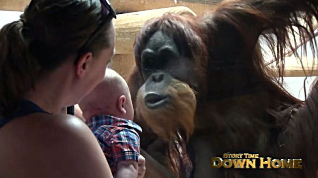 orangutanbaby4