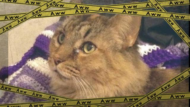cat-4_e0-frame