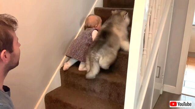 babynpuppy2-03