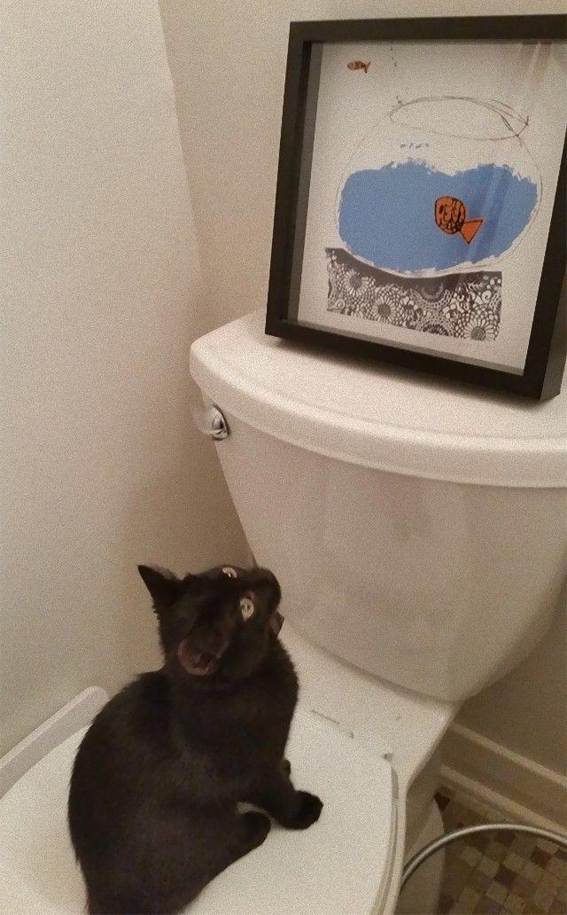 funny-idiot-cats-265-5ae07f58dc45f__605_e