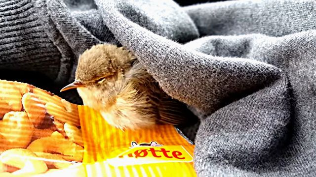 bird0