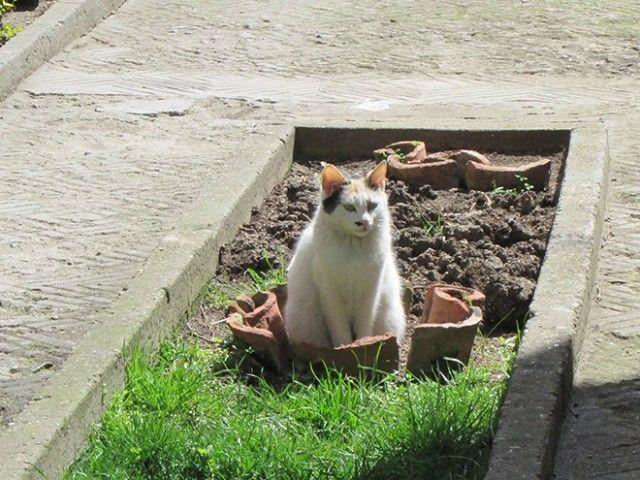 cat-plant4_e