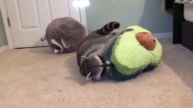raccoonpillow7_e