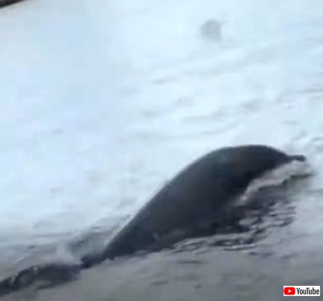 dolphinjuggling2_640