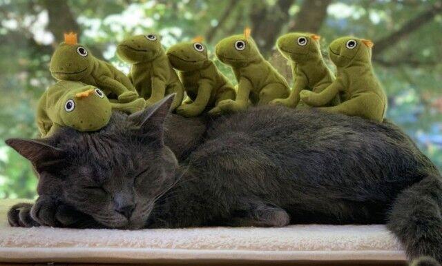 カエルたちと過ごす幸せ!猫のモチさん相変わらずぬいぐるみに埋もれて幸せそう