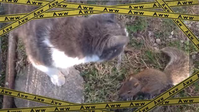 catandsquerrel [www-frame