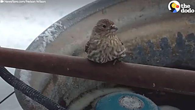 frozenbird2