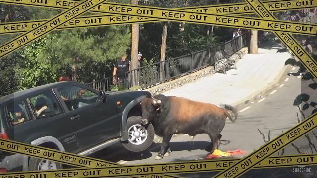 bull-f [www-frame