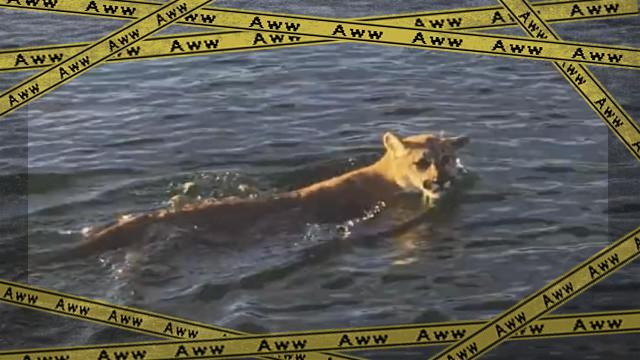 lion-f_e-frame