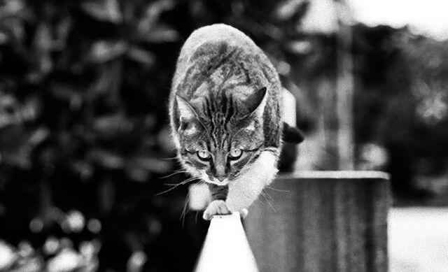 BWcats0_e