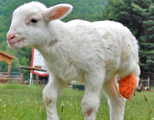felix-sheep-3d-print-leg_e