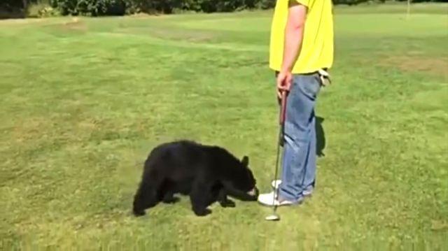 golfbear3