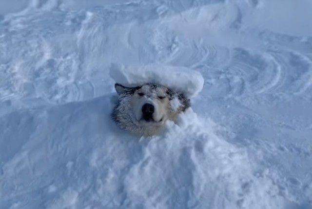 snowdog6_e