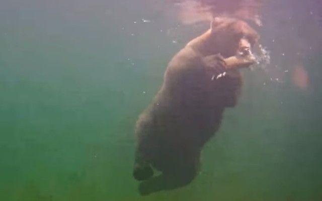 bearcatchingfish0_e