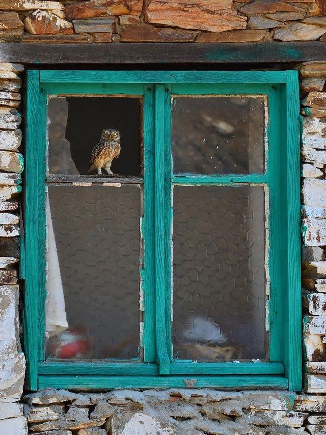 owl-photography-18__880_e