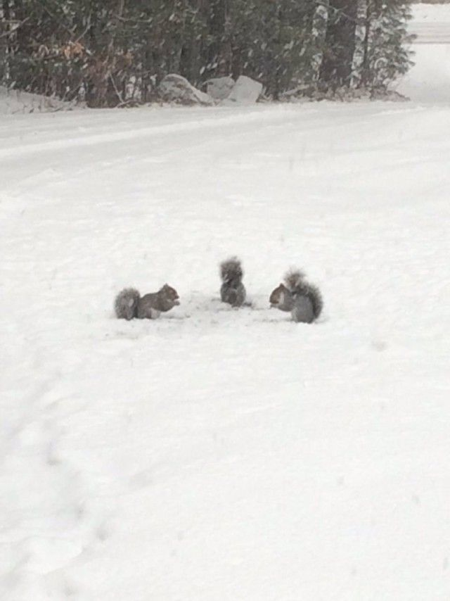 snowanimals7_e