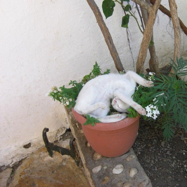 cat-plant20_e