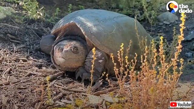 tortoise1_640