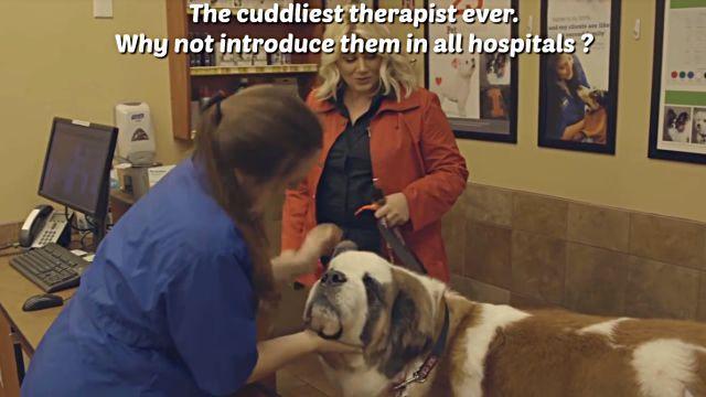 therapydog3