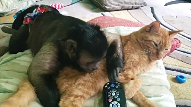 catnmonkeyTV3