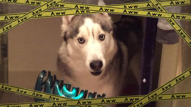 husky-f [www-frame