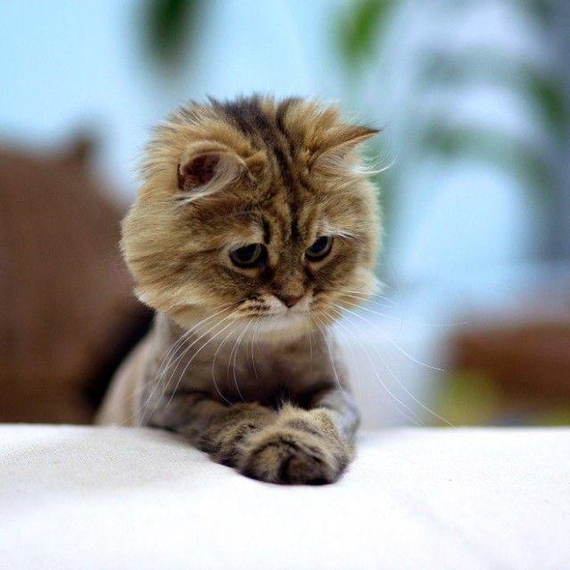 prayingcat1_e