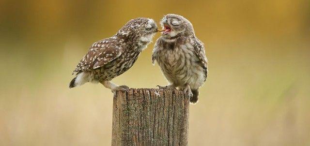 owl-photography-8__880_e