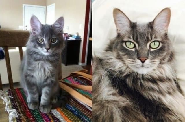 cat-3 [www.imagesplitter.net] (1)