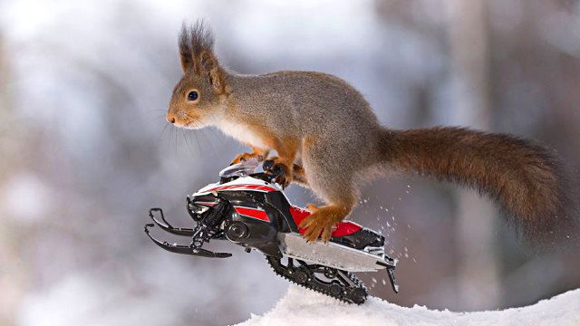 wintersportssquirrel2_ea