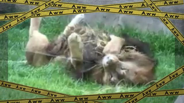 lion-f [www-frame