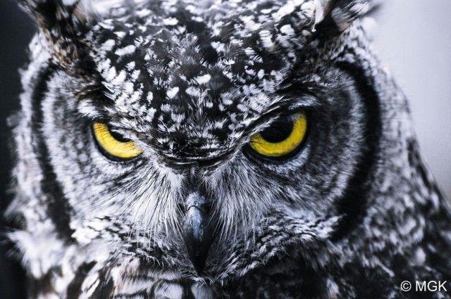 owl-photography-cute-107__880_e