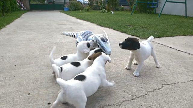 puppiesnrobot2