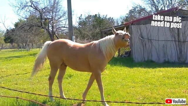 funnyhorses2_640