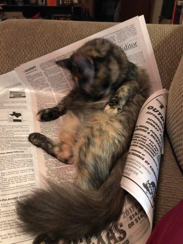 cats-vs-reading21_e