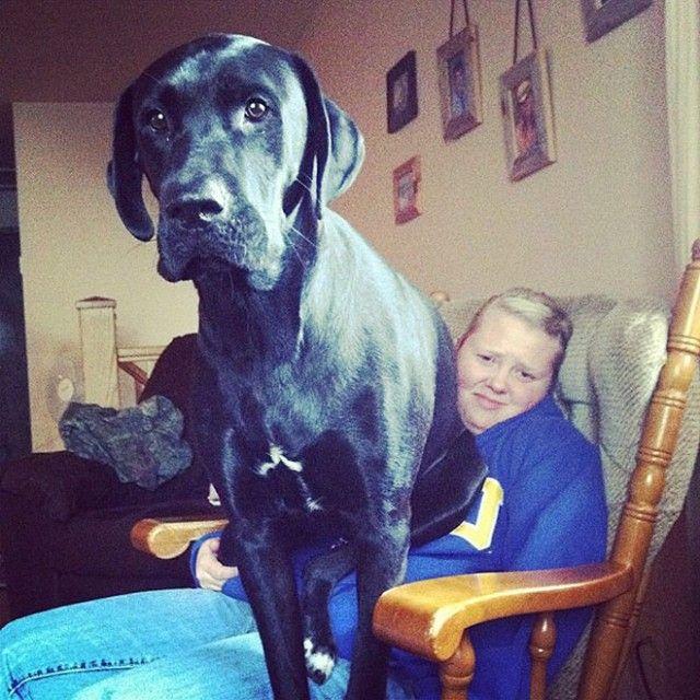 big-puppy15_e