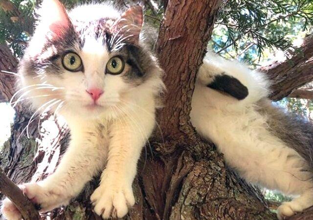 猫ズ「いいから早く迎えに来るニャ!」高い木の上で助けを待つ猫たち