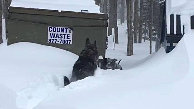 snowdog0