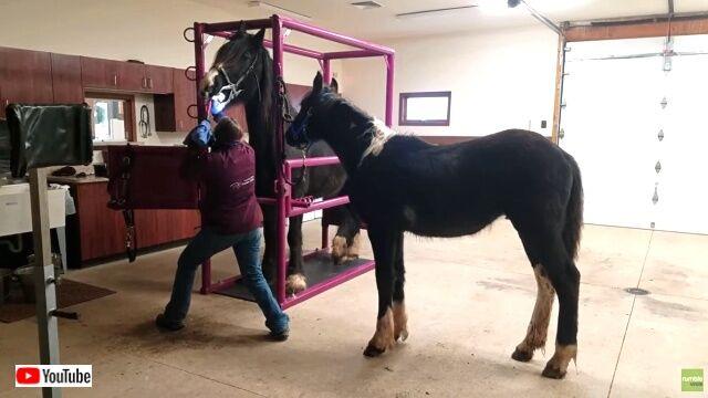 horsedentist0_640