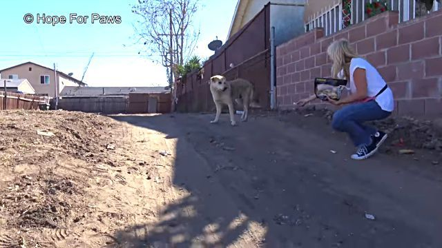homelessdog1