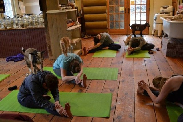yogawithgoats12_e