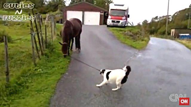 dogpullshorse2