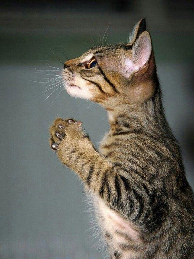 prayingcat16_e