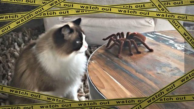 spidercat0-frame