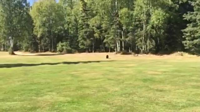 golfbear1