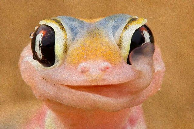 cute-reptiles-107__605_e
