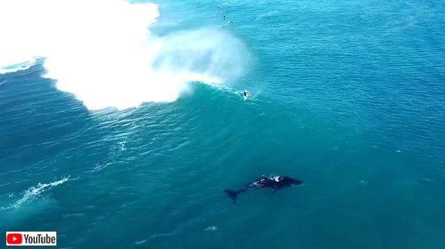 whaledolphinsurfers0_640