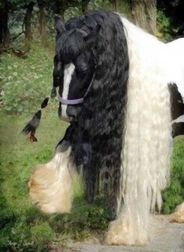 horse9_e