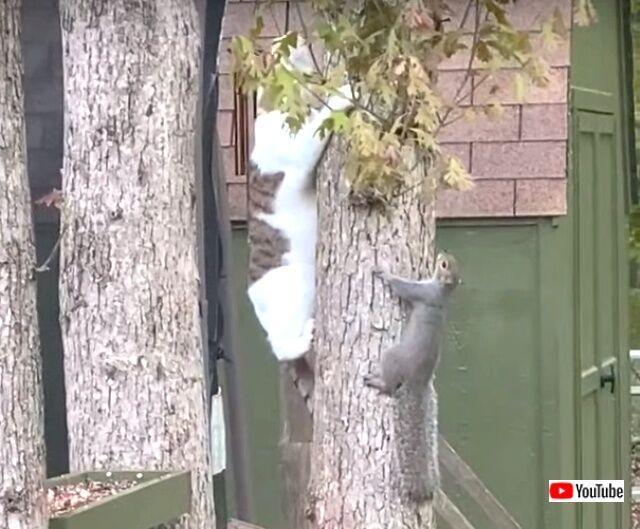 catnsquirrels2_640