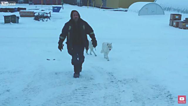 arcticwolf5