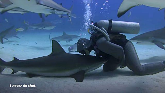 dolphinshark6